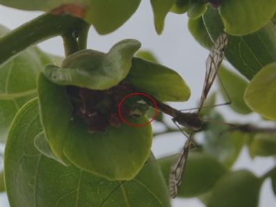 益虫と害虫