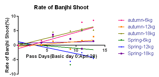banjhi shoot