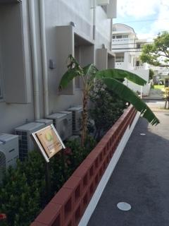 6月沖縄3