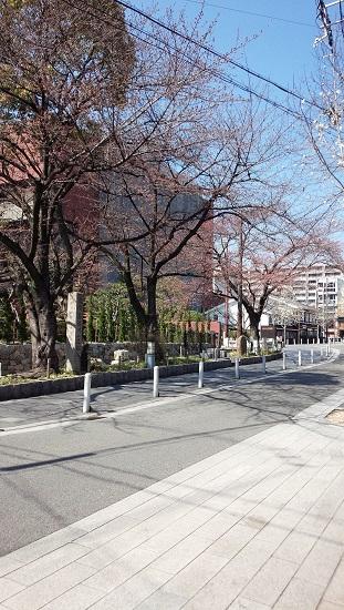 3月京都1