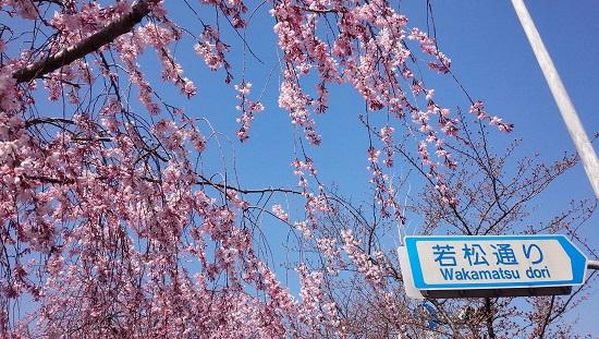 3月京都4