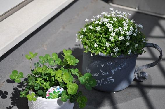 5月の植物