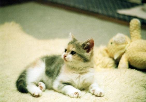 子猫のみーこ1
