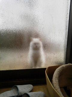 白猫シルエット