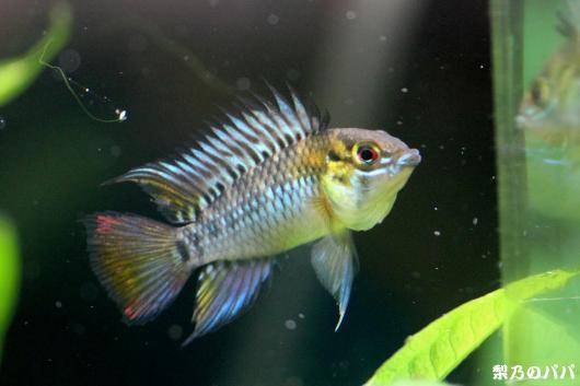 cf.ホイグネイ.リオモリチャルラルゴ♂6
