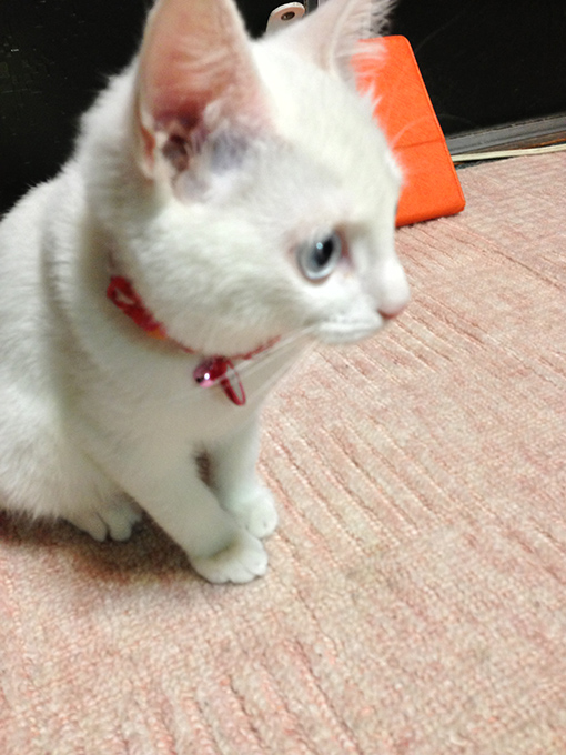 2012年12月30日撮影のマリーちゃん