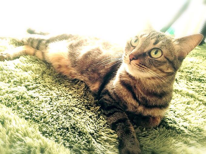 2015年05月23日のキジトラ猫クーちゃん