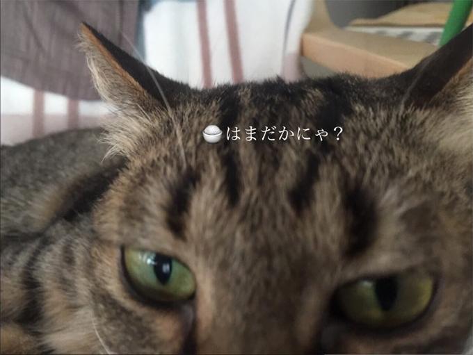 2015年05月27日撮影のクーちゃん