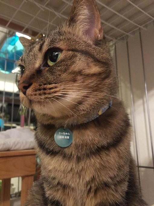 2015年06月04日のキジトラ猫クーちゃん