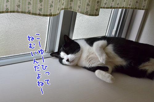 DSC_5172_2.jpg