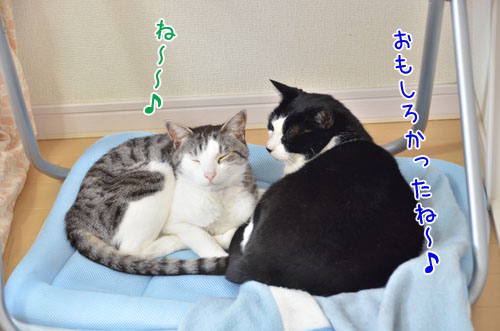 DSC_5349_2.jpg