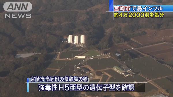 00480_miyazaki_tori_influenza_201412_02.jpg