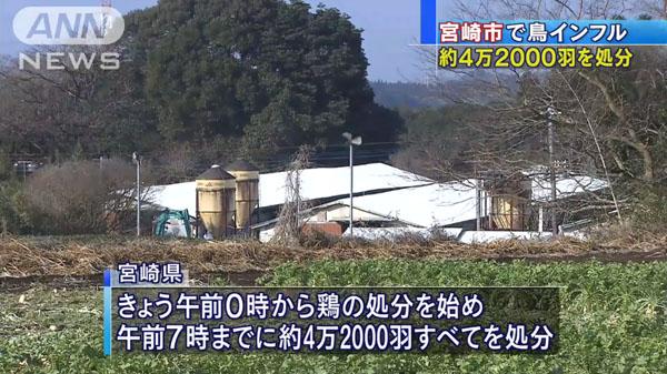 00480_miyazaki_tori_influenza_201412_03.jpg