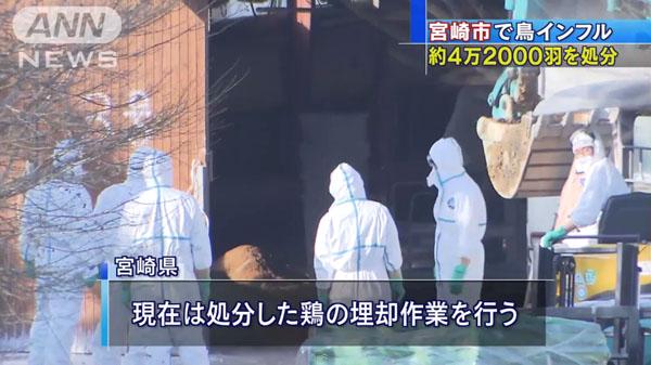 00480_miyazaki_tori_influenza_201412_04.jpg