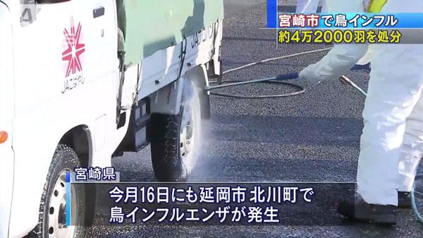 00480_miyazaki_tori_influenza_201412_06.jpg