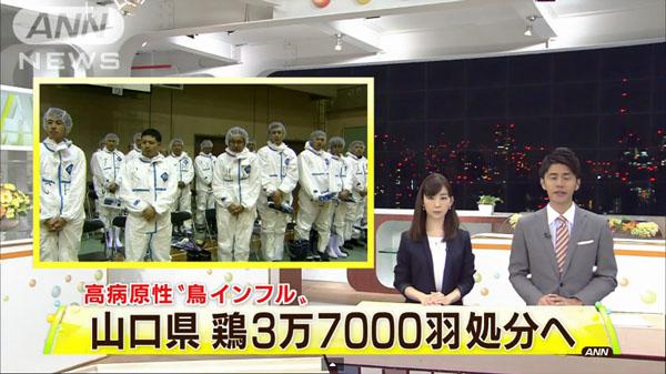 00482_yamaguchi_tori_influenza_201412_01.jpg