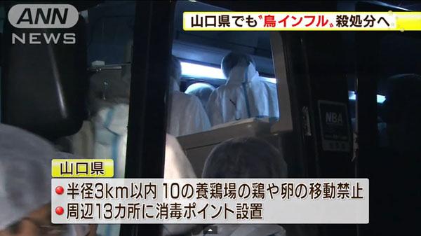 00482_yamaguchi_tori_influenza_201412_05.jpg