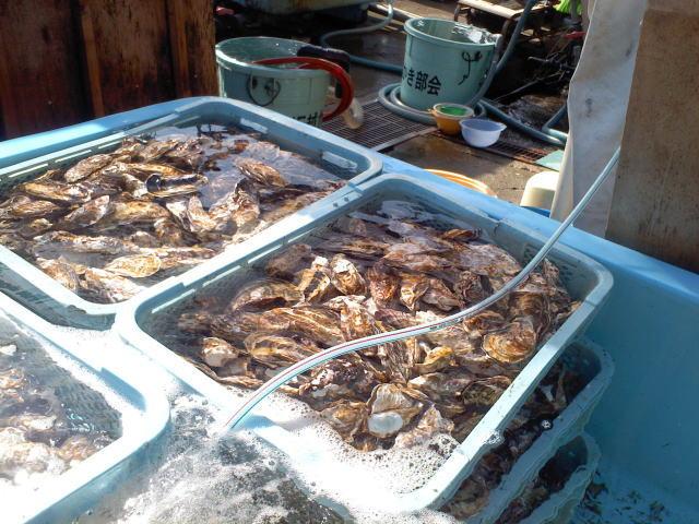 播州赤穂坂越の牡蠣