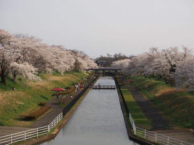 桜遊歩道公園