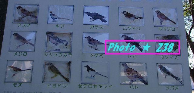見かける鳥