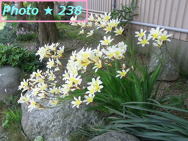 近所の黄色い花