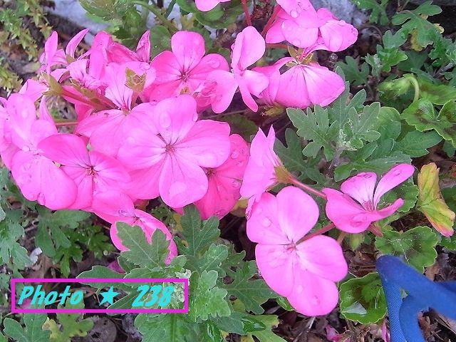 下のピンクの花