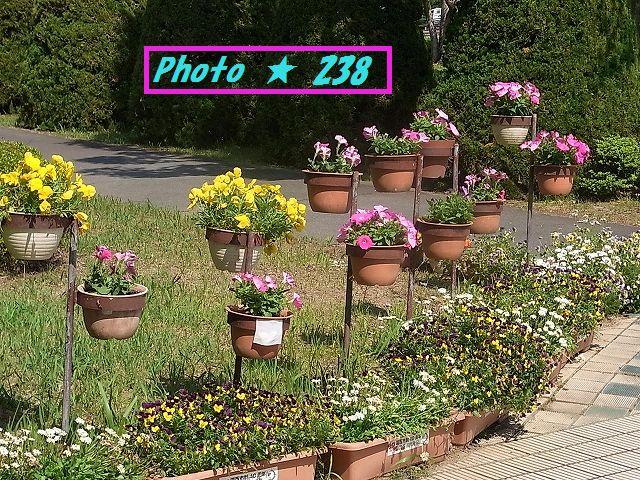 市役所の花①