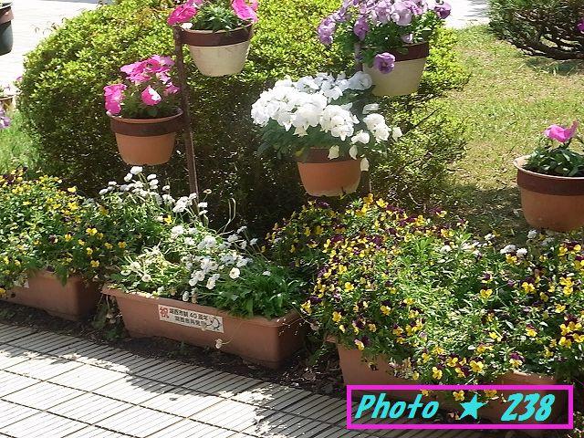 市役所の花②