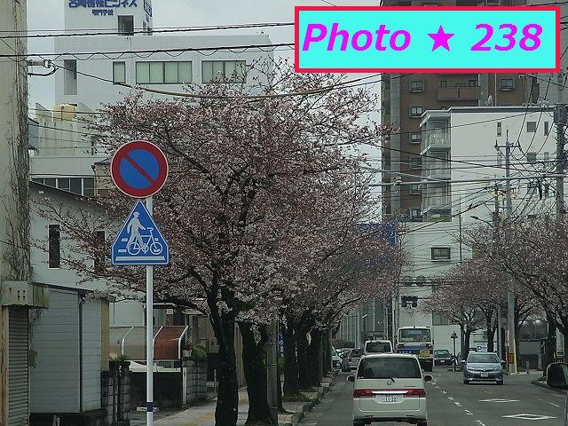 3/29の桜①