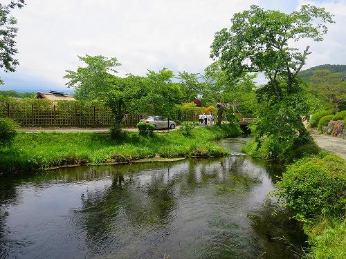 忍野八海 川