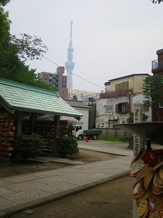今戸神社からスカイツリー