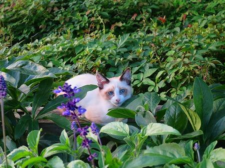 綺麗な子猫1
