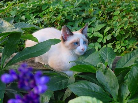 綺麗な子猫2