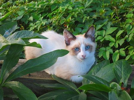 綺麗な子猫3