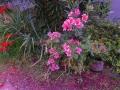 空一面の夕やけ 庭が赤く染まる