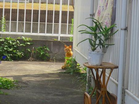 草取り 猫1