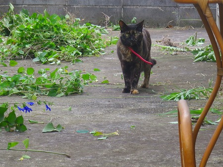 草取り猫2