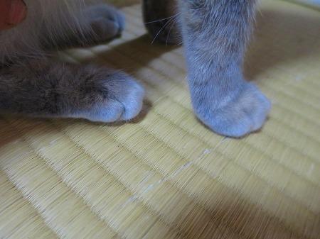 猫 後ろ足と前足