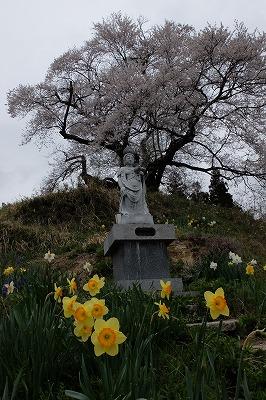 04・19きつねの嫁入り (14)