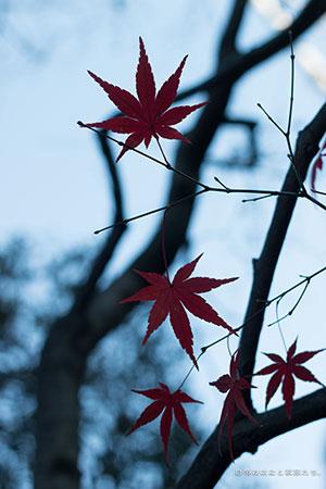20141223-_MG_6509.jpg