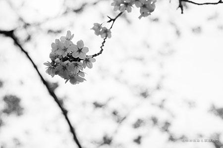 20150328-_MG_7744.jpg