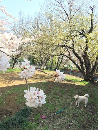 写真-2015-03-30-9-52-57