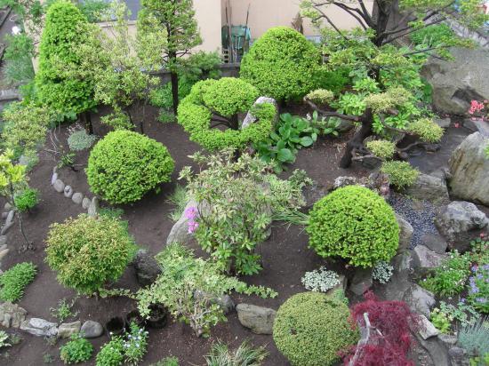 春の庭~2015②