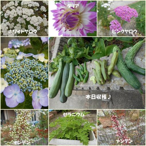 庭の花6月14日
