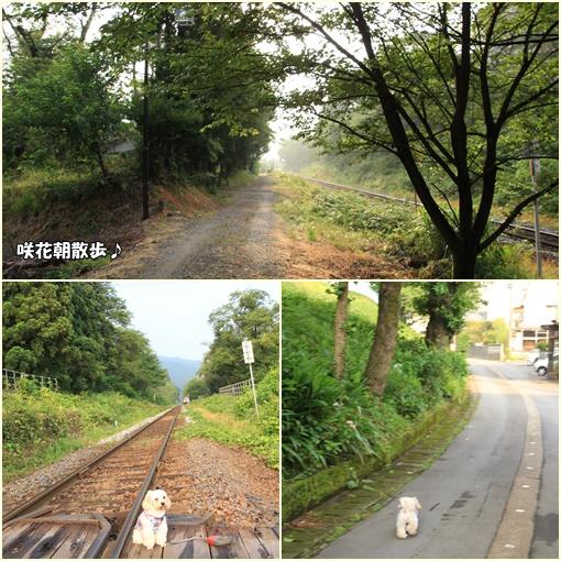 咲花朝散歩♪①