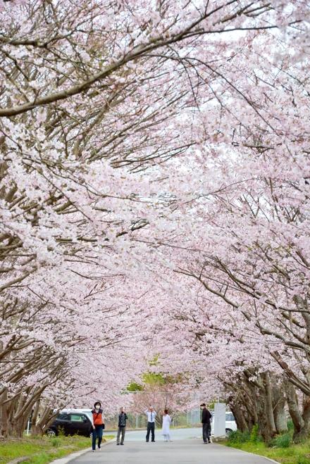 2015-04-01_0079-440.jpg