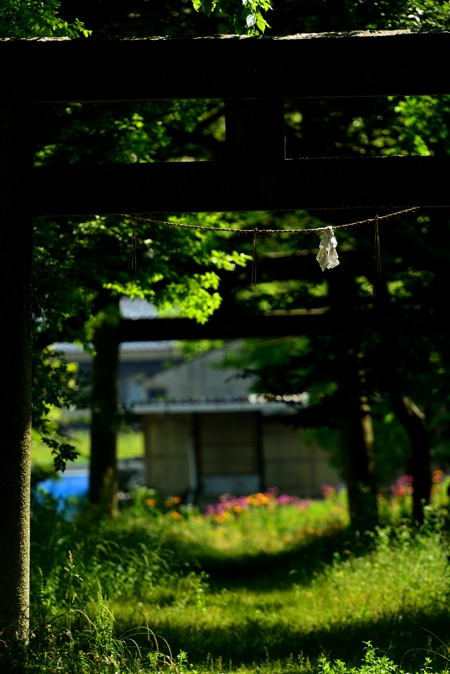 2015-05-29_0016-2-450.jpg