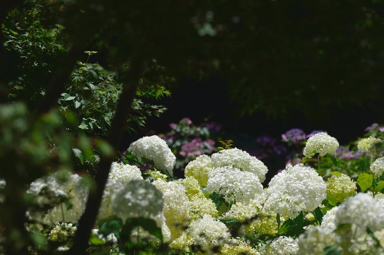 2015-06-29_0121-750.jpg