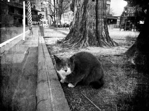 catbw0410.jpg