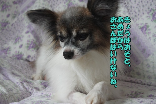 2015041901IMG_.jpg